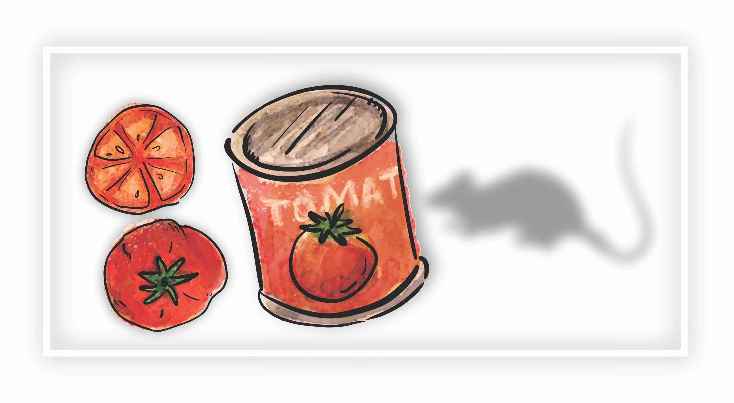 molho de tomate x ratos